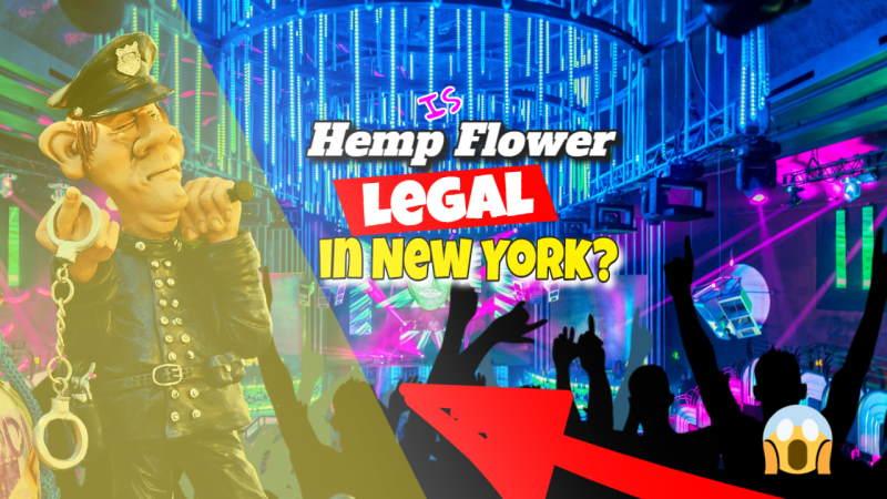 Image illustrates the legality of Hemp in NY