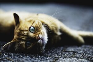 adorable tabby cat