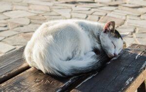 cat sleeping in a ball
